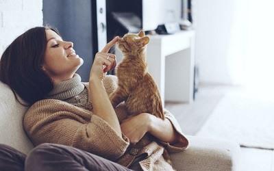 Como Educar a un Gato