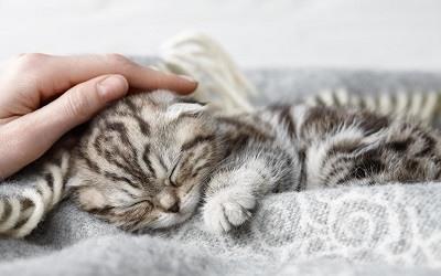 Cosejos Para Educar a Un Gato