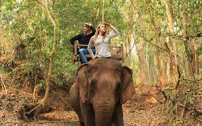 Paseos en Elefante en Laos