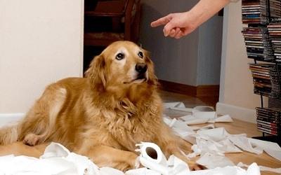 Regañar Perro