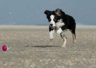 Ensenar a un perro a soltar la pelota