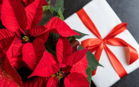 Regala plantas esta Navidad