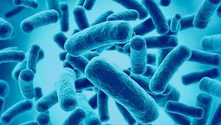 Probióticos defensores de tu flora intestinal