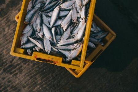 Beneficios del pescado fresco