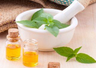 plantas medicinales que debes conocer