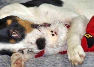 Cuidado canino