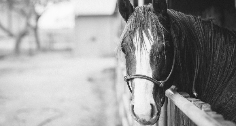 How to Start Your Own Horse Stable