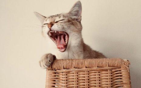 Cuidado bucal en mascotas