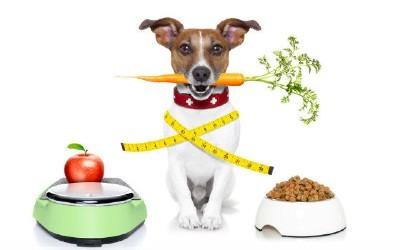 Alimentación correcta para perros