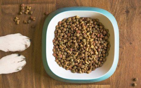 Dieta de tu perro