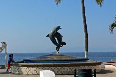 delfines en Puerto Vallarta