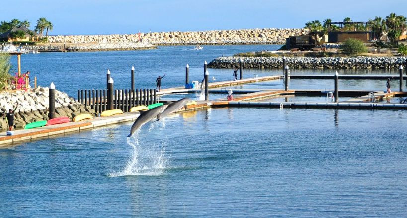 Los Cabos ofrece vivir aventura disfrutar con delfines