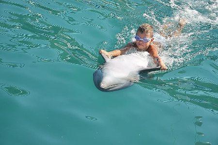 nado con delfines en Los Cabos
