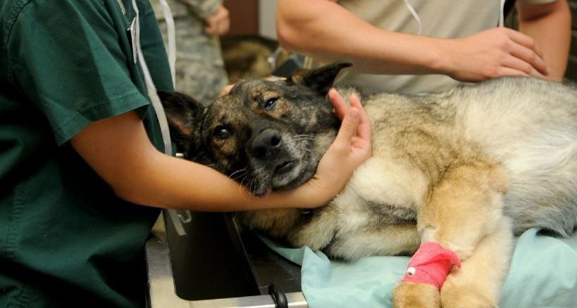 recursos veterinarios a tu alcance